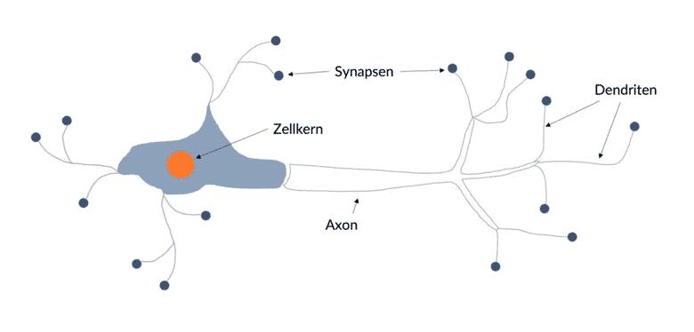 vereinfachte Darstellung einer menschlichen Nervenzelle